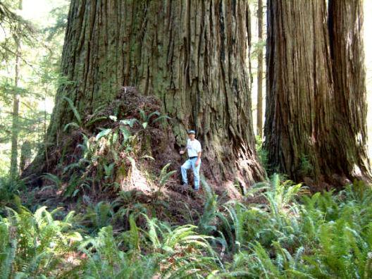 En Uzun Ağaç boyu